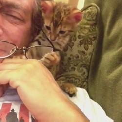 un chaton vole les lunettes de son maître
