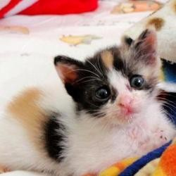 un chaton abandonné sauvé par une courageuse jeune femme en Indonésie