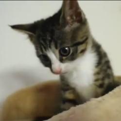 vidéo chaton