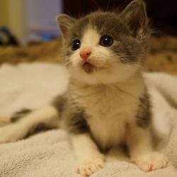 chaton paralysé