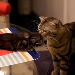 un chaton et son père