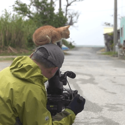 un chaton rencontre un photographe