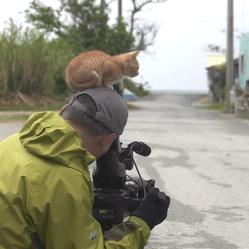 un chaton rencontre un photographe