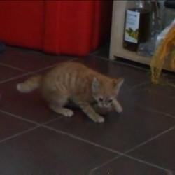 un chaton joue avec une pomme de terre