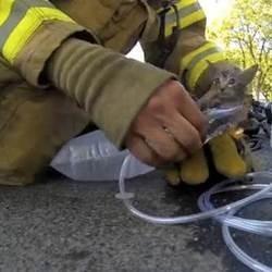 Chaton sauvé par un pompier