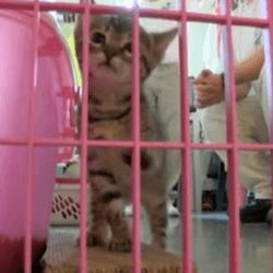 chatons prison