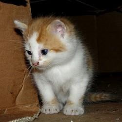 chaton chat sauvé sauvetage