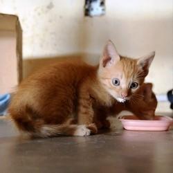 chaton sevrage allaitement