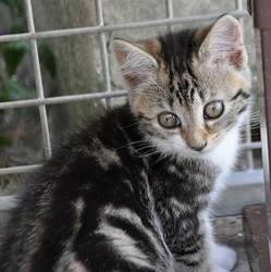 chaton abandonné, refuge spa