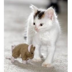 chaton survit usine recyclage