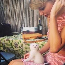 le chaton de Taylor Swift