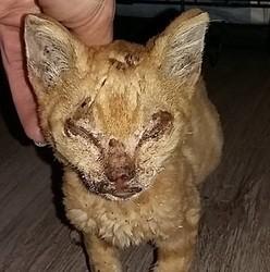 un chaton tortur tente de survivre dans le nord de la