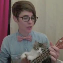 un chaton joue du ukulélé