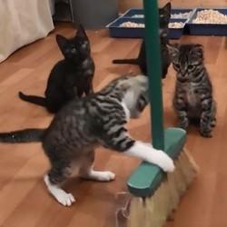 des chatons jouent avec un balai