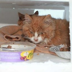 chatons abandonnés