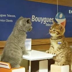 chatons bouygues telecom video buzz