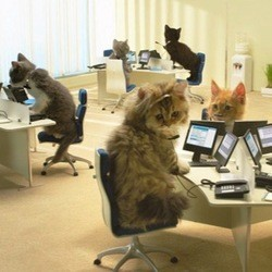 chatons bouygues telecom video making of