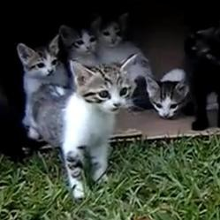 Chatons qui sortent dehors
