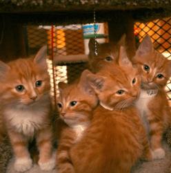 chatons refuge