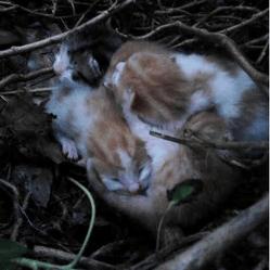 chatons dans un nid