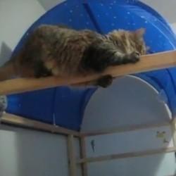 chat acrobatie saut