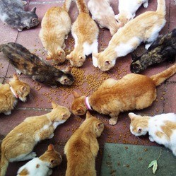 chats attaque policiers paris