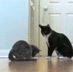 chat bagarre slow motion