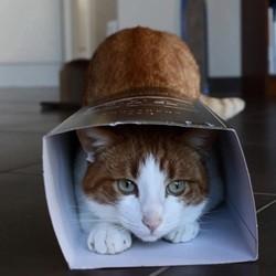 Des chats jouent à cache cache