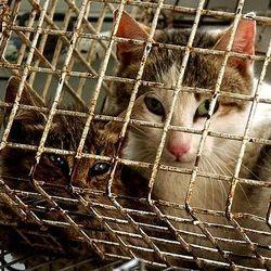 chats maltraités, enfermés