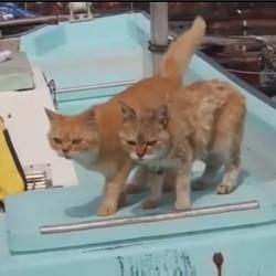 des chats adoptés par des pêcheurs