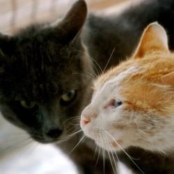 cohabitation chats mésentente comportement