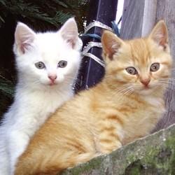 les chats jugés selon la couleur de leur pelage