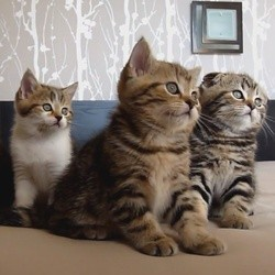 chatons chats danse