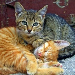 le chat et le deuil
