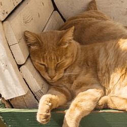 chats endormis