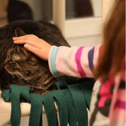 des enfants font la lecteure à des chats de refuge
