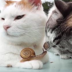 chat escargot