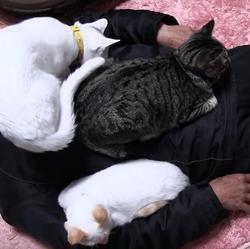L'homme à chats