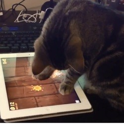 chats tablette