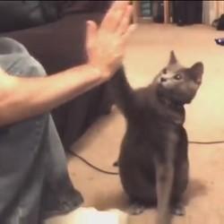 chats tape m'en 5