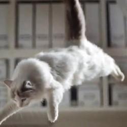 100 chats magasin IKEA publicité