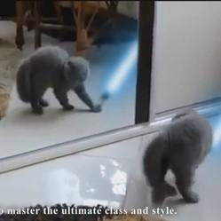 chats jedi faireset