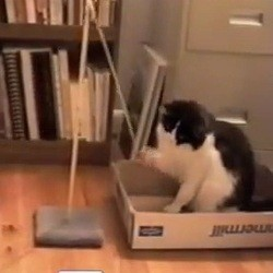chats jouent balle video