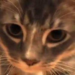 chat laser video wamiz