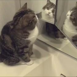 Les chats et les miroirs la v rit enfin d voil e vid o for Miroir sans reflet
