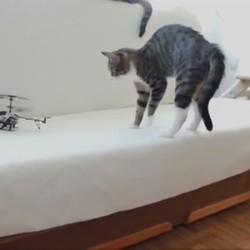 chats peur, faireset