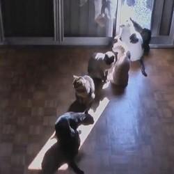chats rayon de soleil