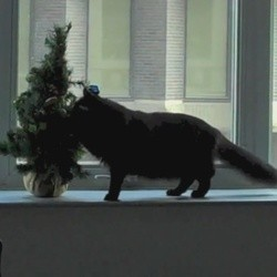 chats sapin de noël