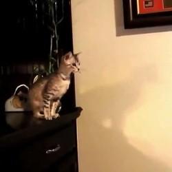 chats qui ratent leurs sauts