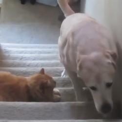 des chats terrorisent des chiens